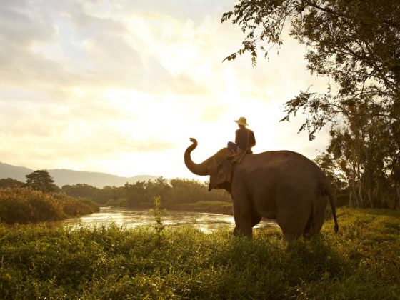 Elephant_and_Mahout , Golden triangle