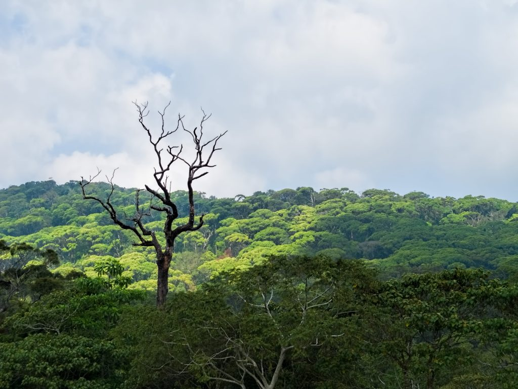 Sinharaja Forest Reserve | Image Credit - Dan Lundberg, CC BY-SA 2.0