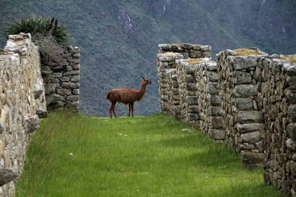 Peru Inca Ancient America Machu Picchu City South