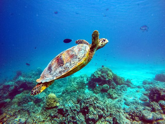 Things to do near Dhonveli
