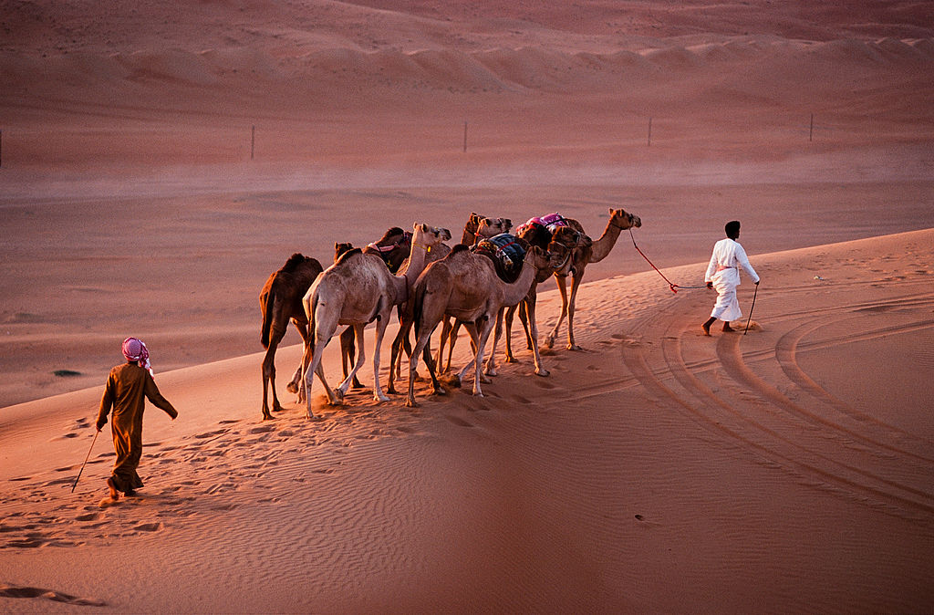 "Camels | Image Credit: <a href=""https://commons.wikimedia.org/wiki/User:D7031tg"">D7031tg</a>, <a href=""https://commons.wikimedia.org/wiki/File:Oman_2010_wahiba_sands_nomads.jpg"">Oman 2010 wahiba sands nomads</a>, <a href=""https://creativecommons.org/licenses/by-sa/3.0/legalcode"" rel=""license"">CC BY-SA 3.0</a>"