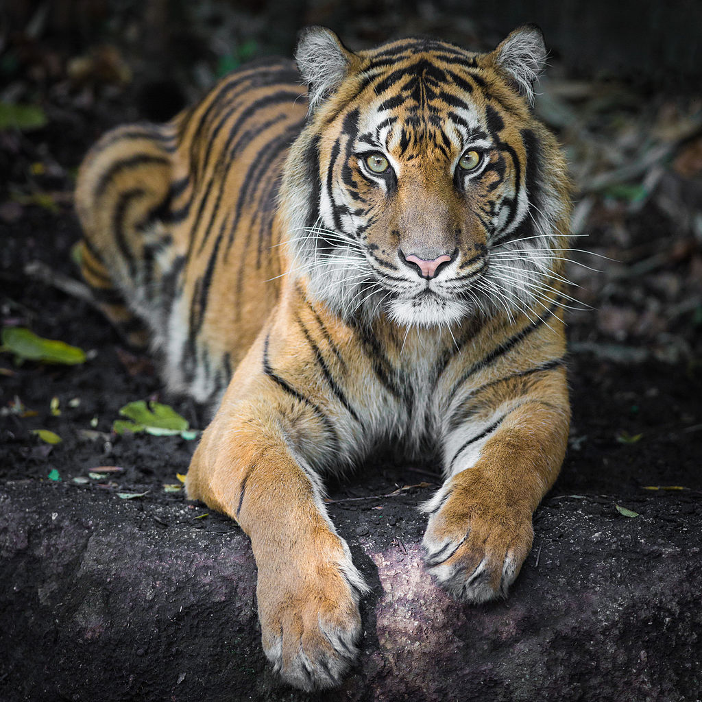 """Melbourne Zoo 