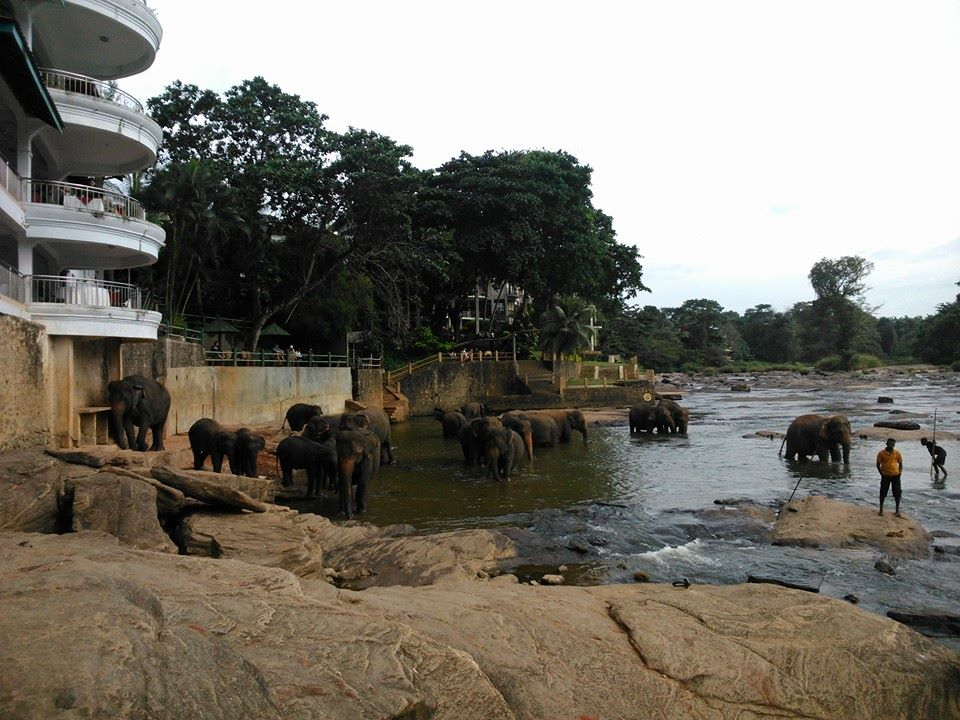 Pinnawala Elephant Orphanage | Image Credit - Lavani Via Facebook