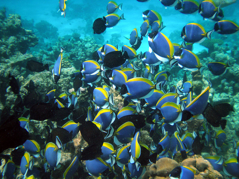 Under Water Maldives | Image Credit - Uxbona, CC BY 3.0 Via Wikimedia Commons